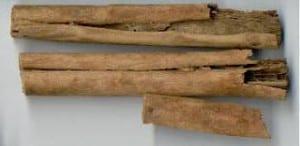 Kaneelschors
