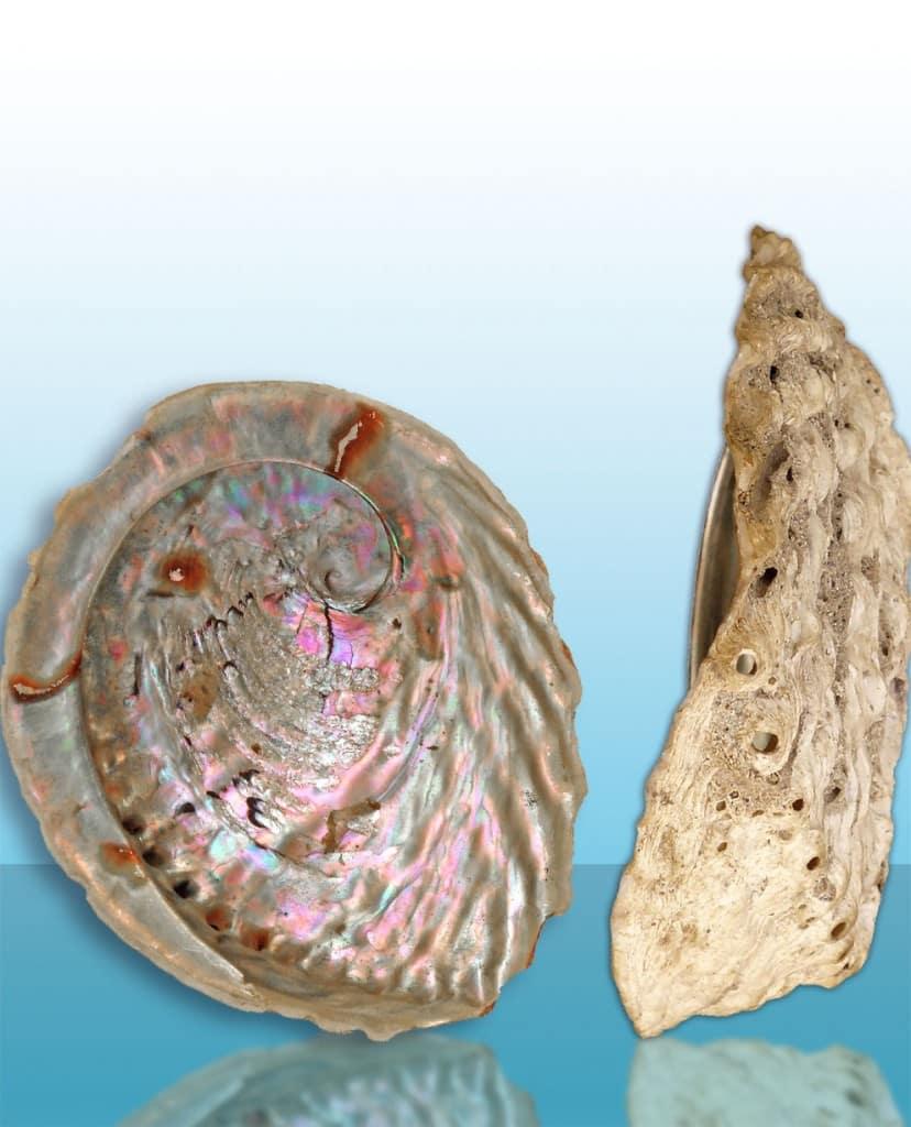 baking-soda-nl-abaloneschelp