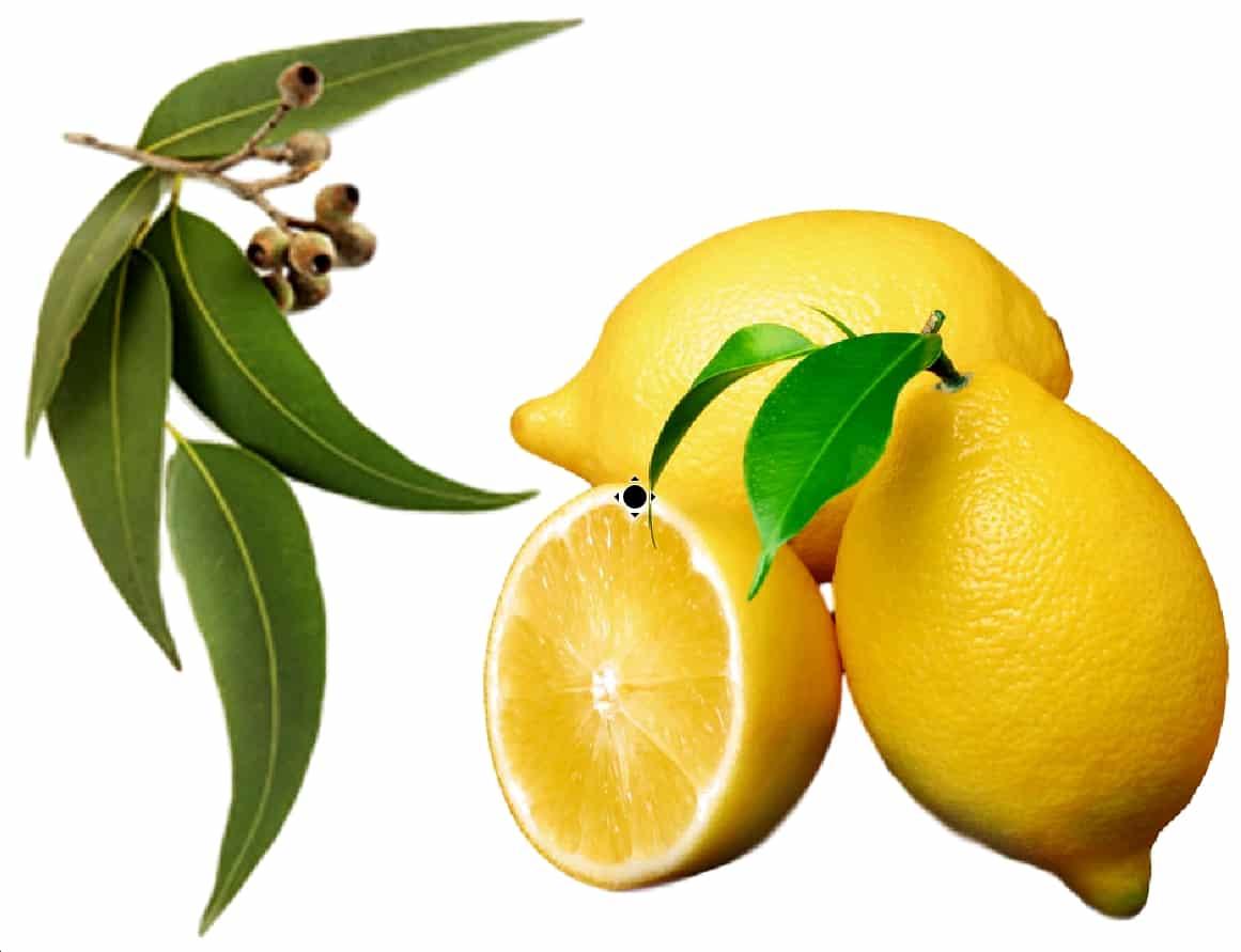 Lemon-eucalyptus