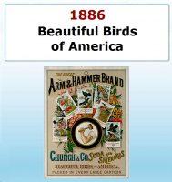 Serie `Beautiful birds of America`