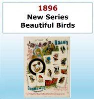 New Series of Beautiful Birds