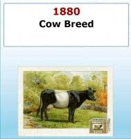 cow-breed-serie-02