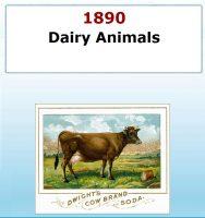 Dairy Animals