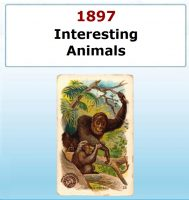 Interesting Animals