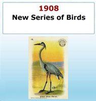 New Series of Birds