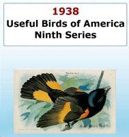 Usefull Birds of America - Ninth Series