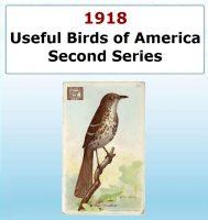 Usefull Birds of America - Second Series