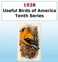 Usefull Birds of America - Tenth Series