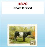 Cow Breed Serie